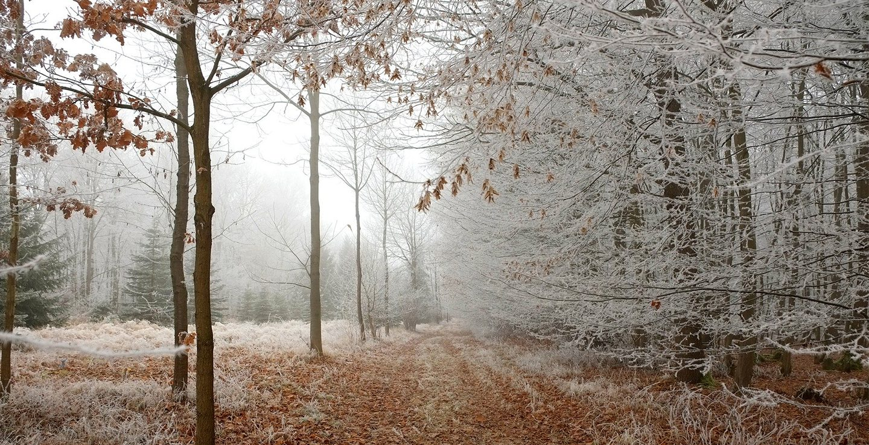 frosty woodlands