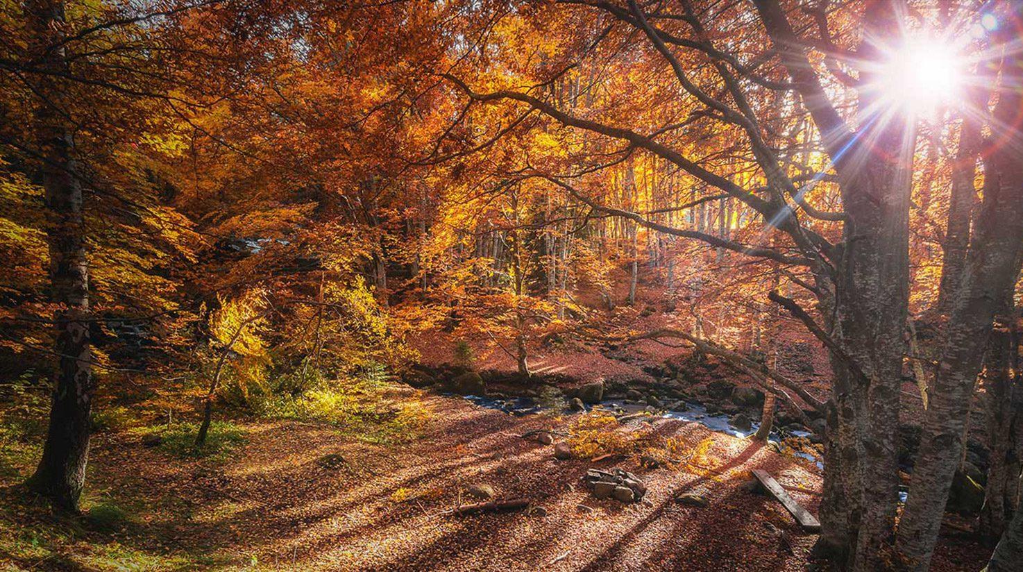 autumn at mallory